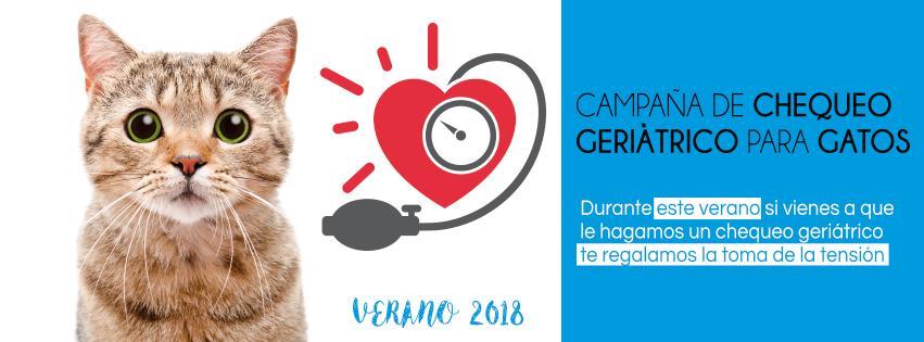 CAMPAÑA DE CHEQUEO GERIÁTRICO PARA GATOS