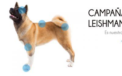 Campaña de salud contra la leishmaniosis 2019-2020
