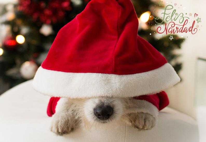 ¡Felicies Fiestas y Próspero Año Nuevo!