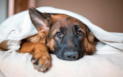 Consejos para cuidar a tu perro en invierno