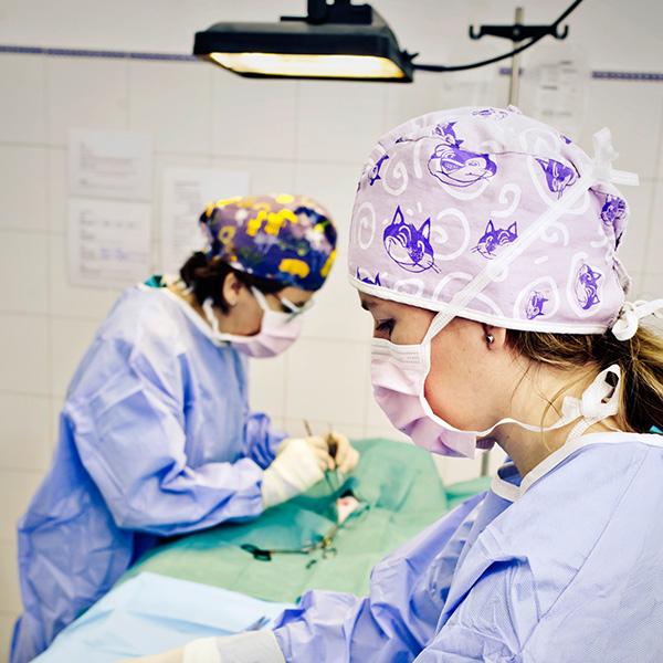 Láser Quirúrgico veterinario