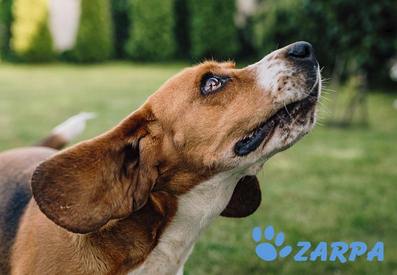 Síntomas de estrés en perros y cómo ayudarlos a superarlo