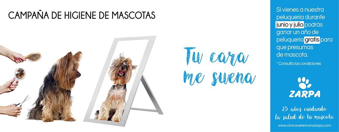 Campaña Higiene Mascotas 2020: Gana un año de Peluquería para tu peludo