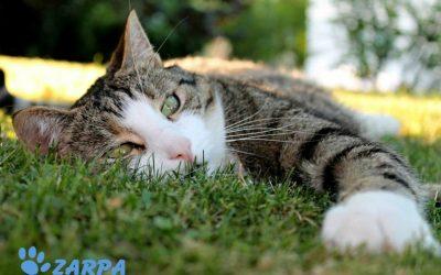 6 claves para que tu gato no pase calor en verano