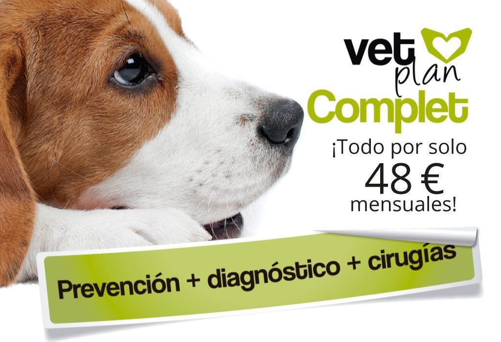 Seguro de salud para perro y gato de alta calidad
