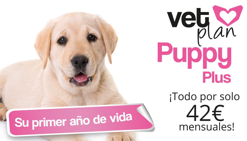 Plan salud perros y gatos cachorros
