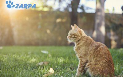 10 Curiosidades sobre los gatos que no sabías