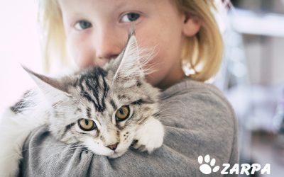 ¿Cómo reducir el estrés de mi gato? Consejos y recomendaciones