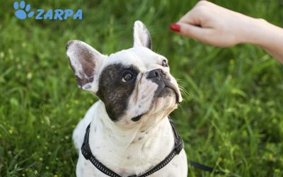 Consejos para educar a tu perro
